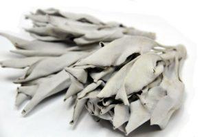ハーブ工房HCC ホワイトセージ100g プロ用 浄化上質クラスター(葉+枝付) カリフォルニア産