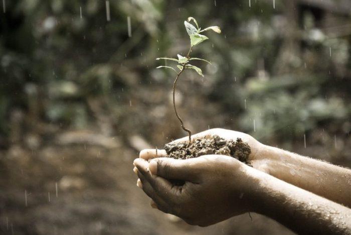 植物を持つ手