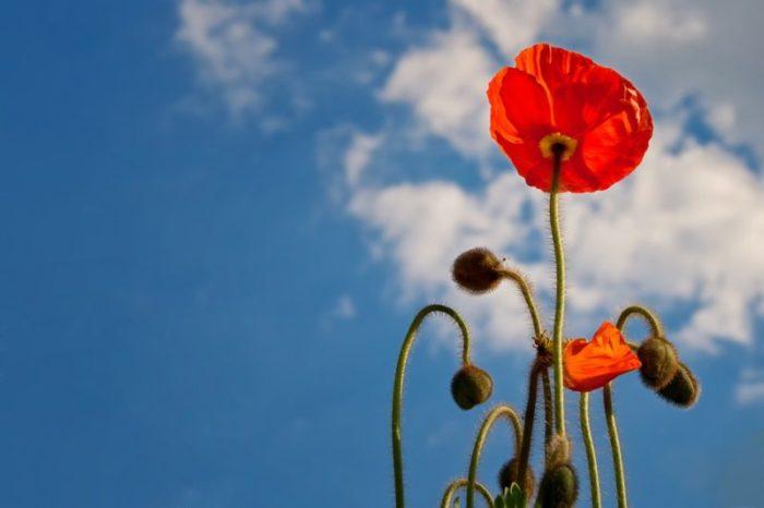 まっすぐ咲いた花