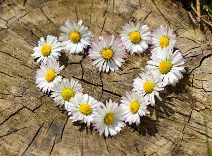 ハート型に並べられた花