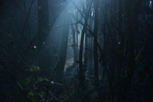不気味 森の中